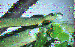 Image from VOA Radiogram on 5745 kHz from Twente University receiver